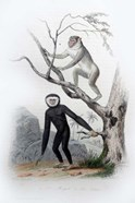Pair of Monkeys III