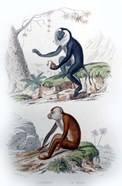 Pair of Monkeys IV