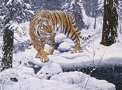 Silent Hunter- Siberian Tiger