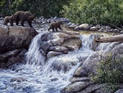 Entiat Falls-Grizzly Family