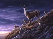 Threatening Sky Red Deer