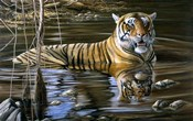 Cooling Off Bengal Tiger