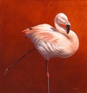 Flame Bird Flamingo