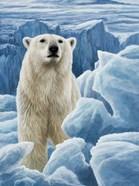 Ice Bear Polar Bear
