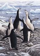 Chorus Chinstrap Penguins