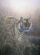 Tiger At Dawn