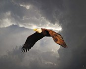 Above The Storm Bald Eagle
