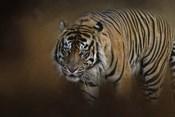Bengal Stare