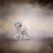 Bichon On The Go