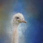Blue Eyed Beauty Ostrich