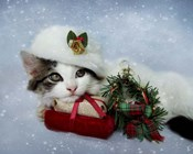Christmas Kitten In The Snow