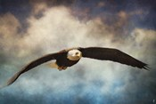 Coming Home Bald Eagle