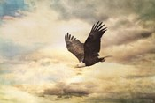 Early Evening Flight Bald Eagle 1