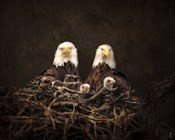 Family Is Forever Bald Eagles