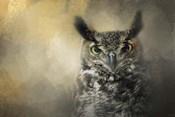 Golden Eyes Great Horned Owl