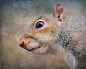 Gray Squirrel Portrait