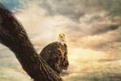 Her Majesty Bald Eagle
