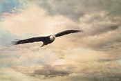 High Flyer Bald Eagle