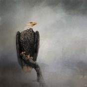 High Perch Bald Eagle