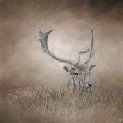 In Plain Sight Sika Deer