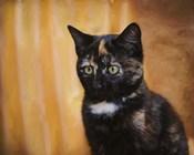 Jeweled Eyes Tortoiseshell Kitten