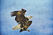 Landing Gear Bald Eagle