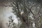 Last Winter Blast Bald Eagle