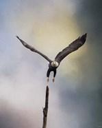 Lift Off Bald Eagle
