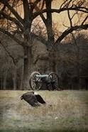 Low Flyer Bald Eagle