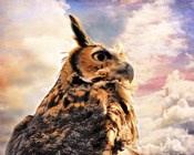 Majestic Great Horned Owl