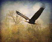 Monarch Of The Skies Bald Eagle