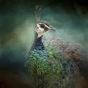 Peacock 12
