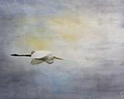 Silent Flight Great White Egret