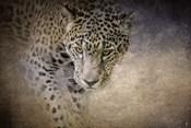 Stalking Her Prey Leopard