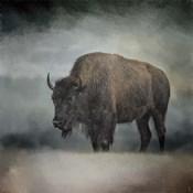 Stormy Day Buffalo