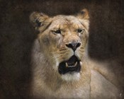 The Lioness Portrait