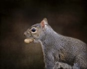 The Nut Collector Squirrel