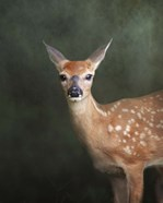 White Tailed Fawn Portrait