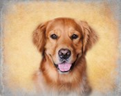 Young Golden Retriever Portrait