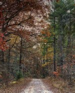 Chickasaw Forest In Autumn 1