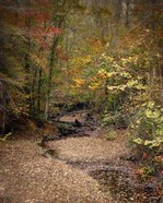 Creek Bed In Autumn