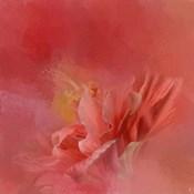 Salmon Hibiscus 3