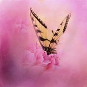Butterfly On The Azaleas