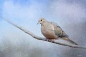 Dove In The Snow