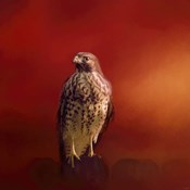 Hawk On A Hot Day
