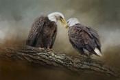 Quiet Conversation Bald Eagles
