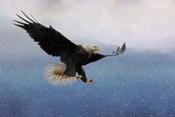 Snowy Flight Bald Eagle