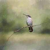 Tiny Visitor Hummingbird
