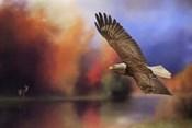 Fall Flight Bald Eagle