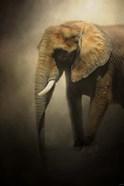 The Elephant Emerges